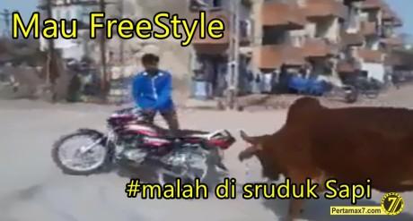 Freestyle motor malah di seruduk Sapi