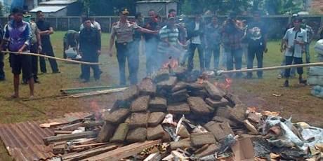 polisi bakar ganja warga pusing