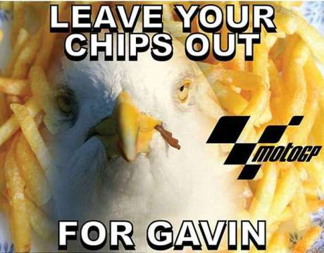 Kematian Gavin si Burung camar Akibat Tabrak Iannone Motogp Bikin Sedih Warga Australia pertamax7.com