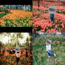 Miris,-Taman-Bunga-Amarillys-yang-indah-di-Pathuk-Gunung-Kidul-Itu-Rusak-DI-Injak-Alay-er-02-Pertamax7.com-2