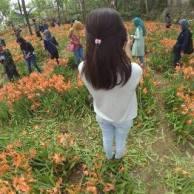 Miris, Taman Bunga Amarillys yang indah di Pathuk Gunung Kidul Itu Rusak DI Injak Alay-er 03 Pertamax7.com
