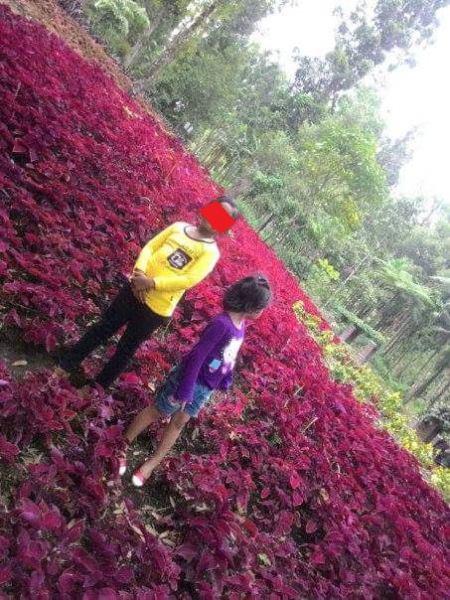 Baru Saja Di Resmikan Gubernur Jawa Tengah, Taman Bunga Kebun Raya Baturraden Di Injak-Injak Pasukan Selfie 04 Pertamax7.com