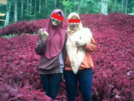 Baru Saja Di Resmikan Gubernur Jawa Tengah, Taman Bunga Kebun Raya Baturraden Di Injak-Injak Pasukan Selfie 05 Pertamax7.com
