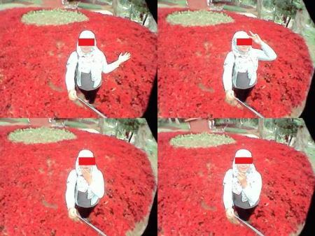 Baru Saja Di Resmikan Gubernur Jawa Tengah, Taman Bunga Kebun Raya Baturraden Di Injak-Injak Pasukan Selfie 07 Pertamax7.com