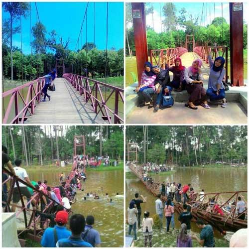 Dinaiki-Ratusan-Alay-Selfie,-Jembatan-Gantung-Ambruk-di-Hutan-Bale-Jurong-Kota-Langsa-Aceh--pertamax7.com