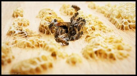 i Hari Lebah Sedunia
